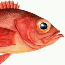 Redfish Events